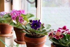 Flores para usar na decoração interna
